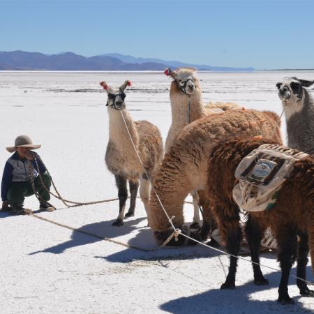 """Trekking with llamas at """"Salinas Grandes"""" in Northern Argentina"""