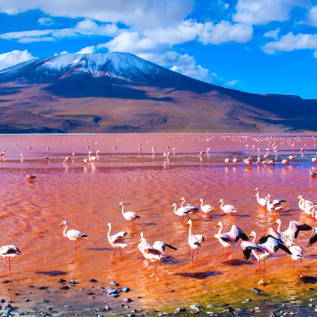 Eduardo Avaroa Reserve, home of Vicuñas and Flamingoes who live in colored lagoons surrounded by deserts and geysers.