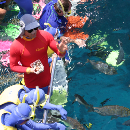 The Great Barrier Reef, an extraordinary experience that engages all your senses.