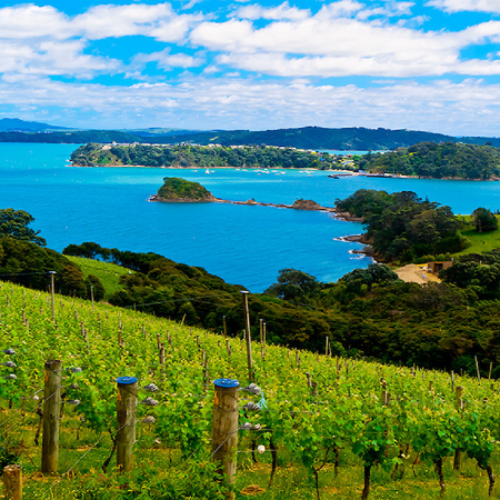 Waiheke Island – is a haven of beautiful vineyards, olive groves and beaches, all just a 35-minute ferry ride from downtown Auckland.