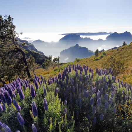 Amazing walks in Madeira: Discover the secrets and history of Funchal, Medeira Island. Learn about Madeira's tropical fruits and flowers, its famous bread, Madeira wine & Poncha.