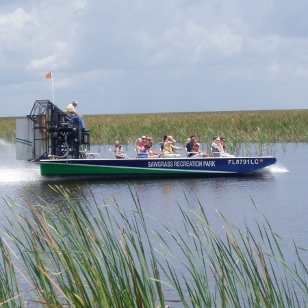 Take an airboat ride in the Florida Everglades in search of large alligators!