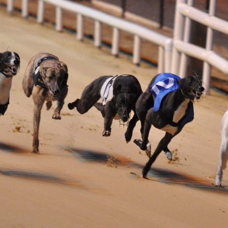 Irish Greyhound Racing  (only half an hour from Killarney town centre)