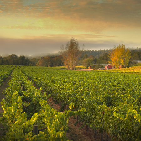 Explore boutique and famous wineries with your personal guide, dine with a celebrity chef!