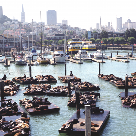 Head to Fisherman's Wharf for sights of lounging Sea Lions the freshest seafood!