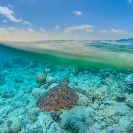 """Explore the mind blowing coral reefs while snorkeling, and even say """"hi"""" to turtles"""