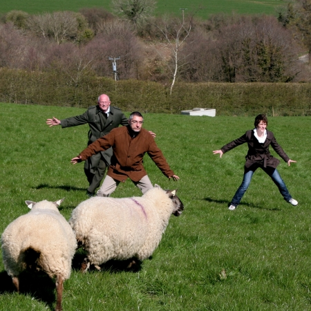 Sheep dog demonstration on the Ring of Kerry