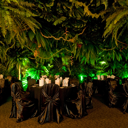 Rainforest Extravaganza - All the wonders of the rainforest put together in a memorable night of passion
