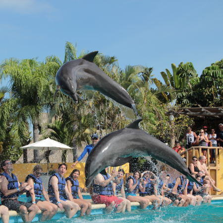 Tropical Dolphin Swim an exclusive program which offers the best of all existing dolphin programs in the destination, created for the groups managed by Tropical Incentives DMC