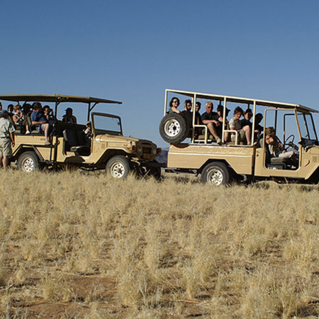 Go on a desert safari to view spectacular sunrises and wildlife