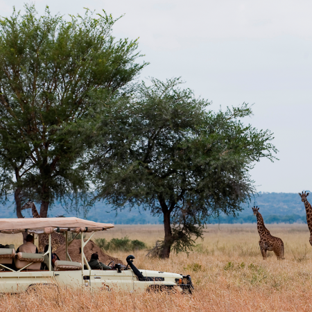 A game drive at 1st light to spot wild animals in their natural environment
