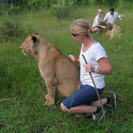 Get up close and personal as you walk with the king of the jungle