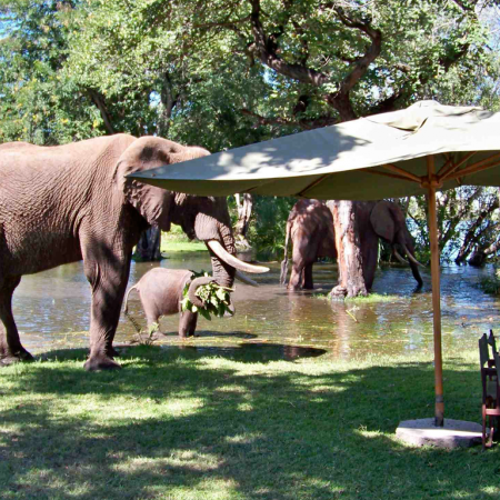 Have lunch with the elephants under African skies